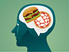 Disruptions in a specific signaling pathway in the brain can cause overeating of high-fat food, researchers at Vanderbilt University have found. Basic research on obesity is relevant to the VKC mission because children and adults with developmental disabilities have high rates of obesity.